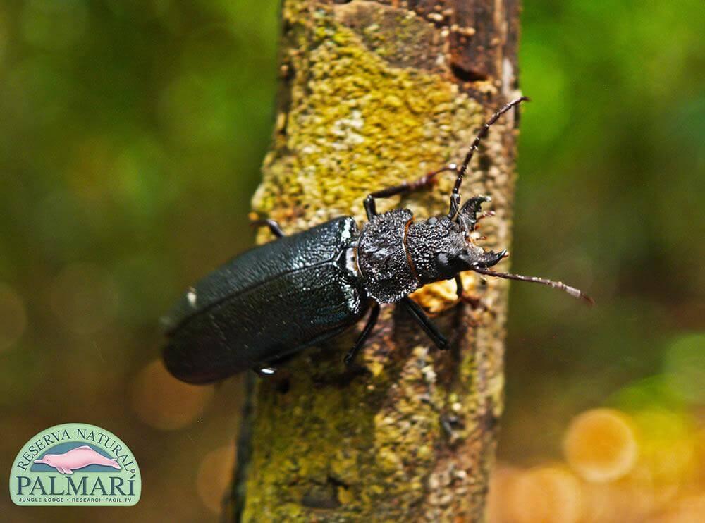 Reserva-Natural-Palmari-Fauna-131
