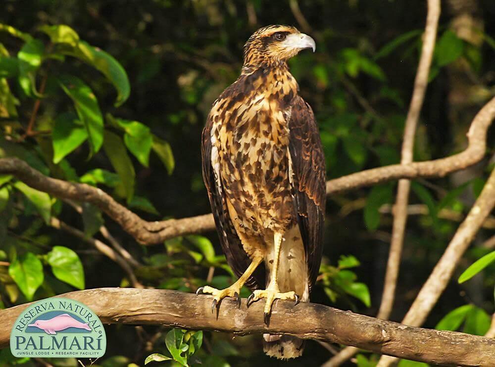 Reserva-Natural-Palmari-Fauna-132