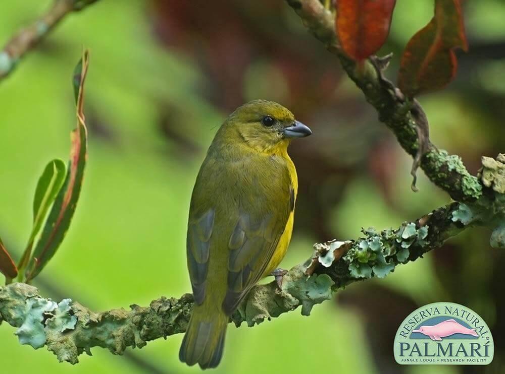 Reserva-Natural-Palmari-Fauna-134
