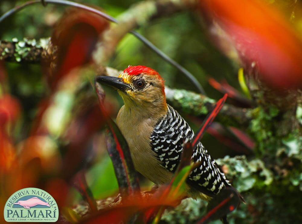 Reserva-Natural-Palmari-Fauna-135