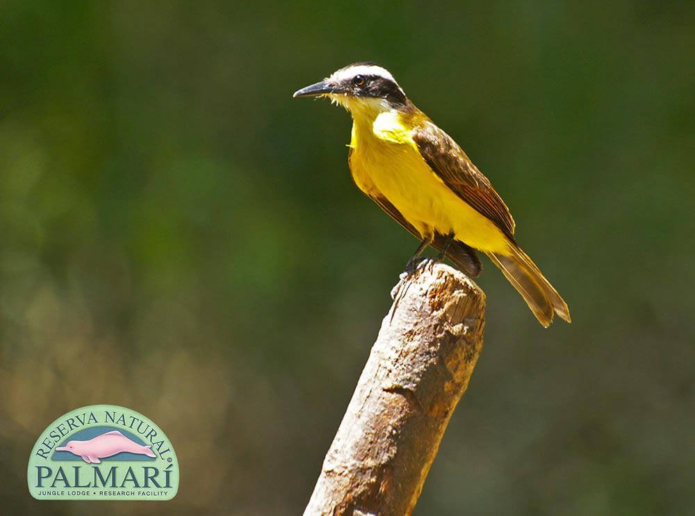 Reserva-Natural-Palmari-Fauna-136