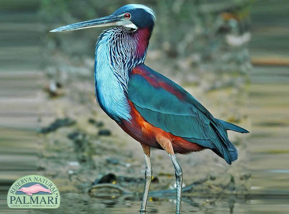 Reserva-Natural-Palmari-Fauna-137