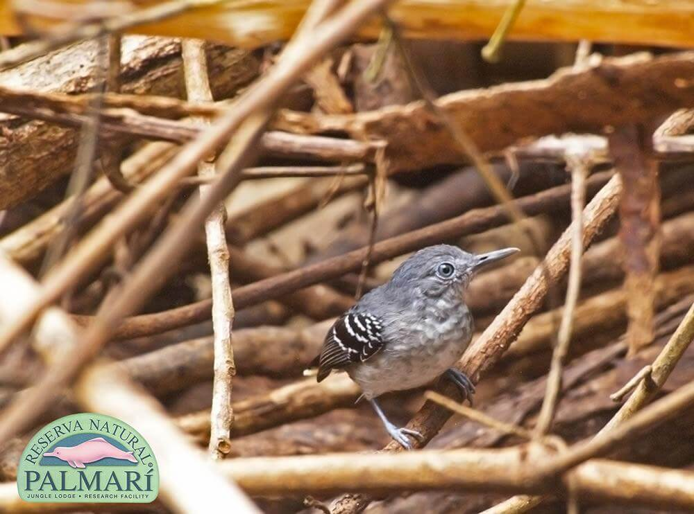 Reserva-Natural-Palmari-Fauna-140