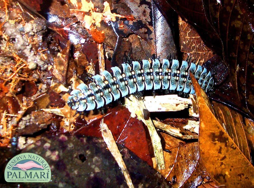Reserva-Natural-Palmari-Fauna-142