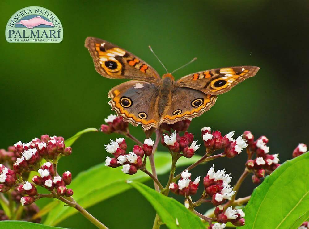 Reserva-Natural-Palmari-Fauna-146