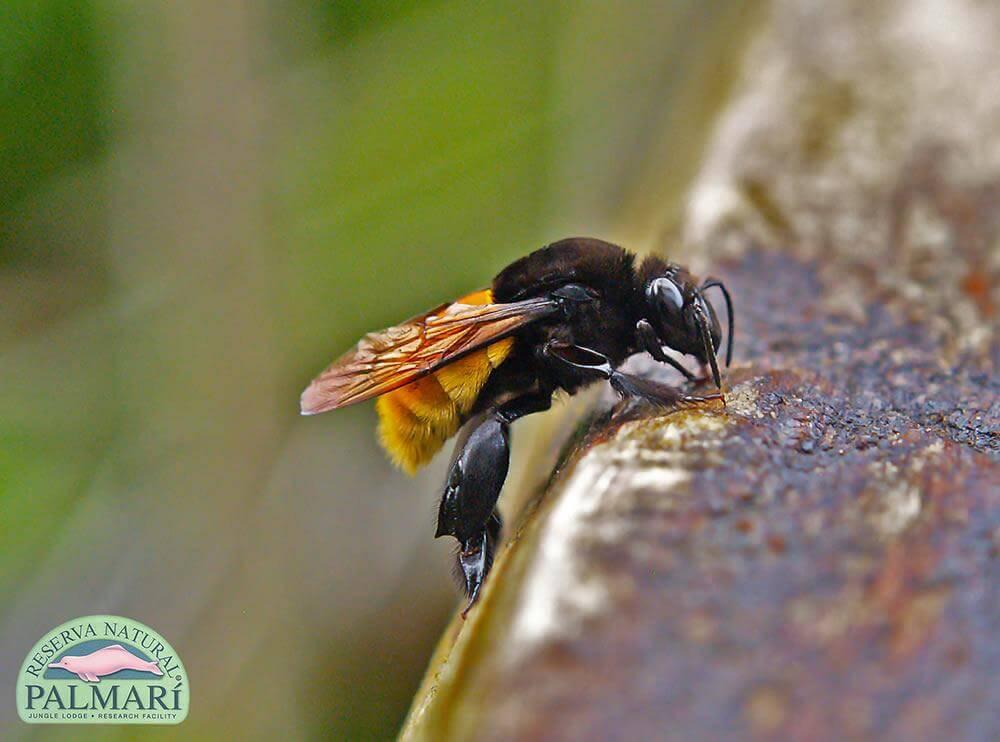Reserva-Natural-Palmari-Fauna-148