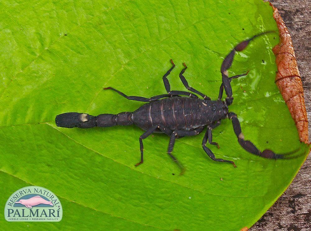 Reserva-Natural-Palmari-Fauna-150
