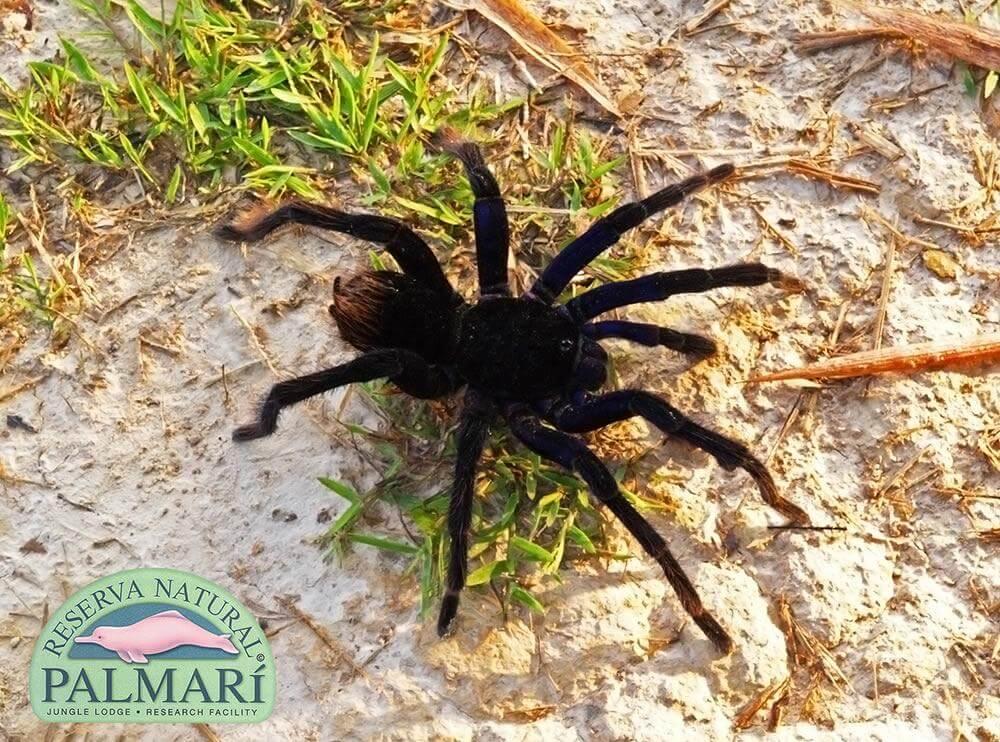 Reserva-Natural-Palmari-Fauna-152