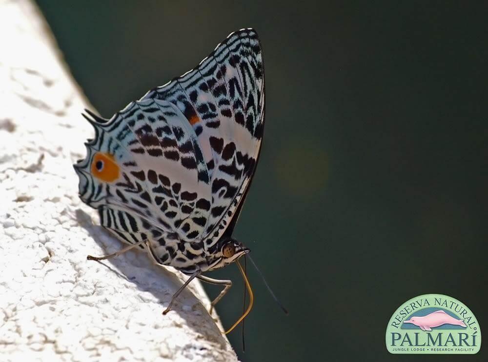 Reserva-Natural-Palmari-Fauna-154