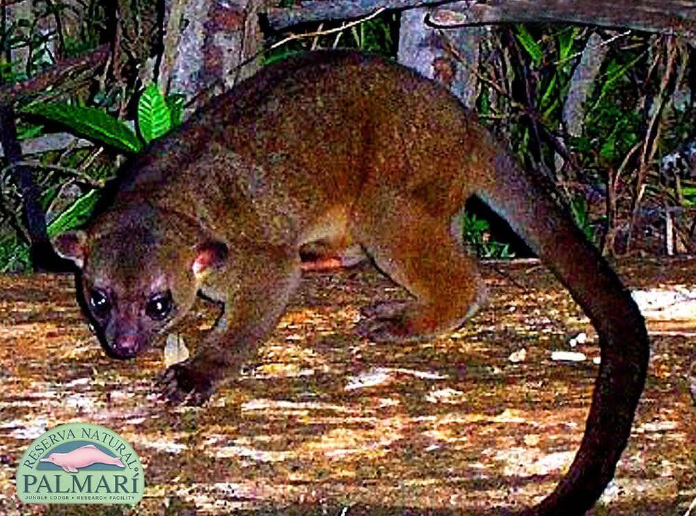 Reserva-Natural-Palmari-Fauna-155