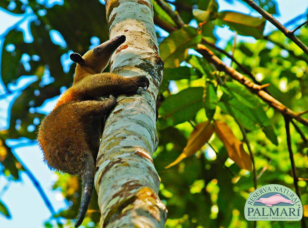 Reserva-Natural-Palmari-Fauna-156