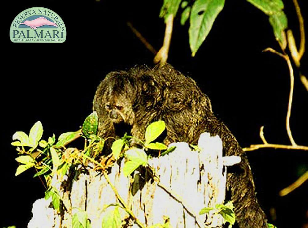 Reserva-Natural-Palmari-Fauna-159