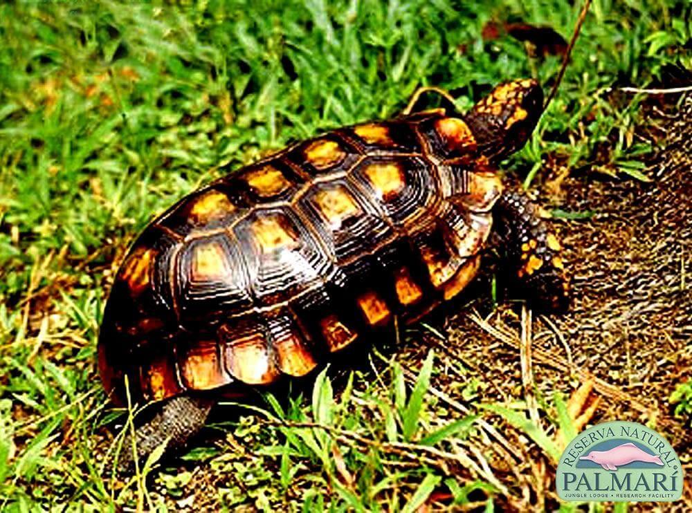Reserva-Natural-Palmari-Fauna-160