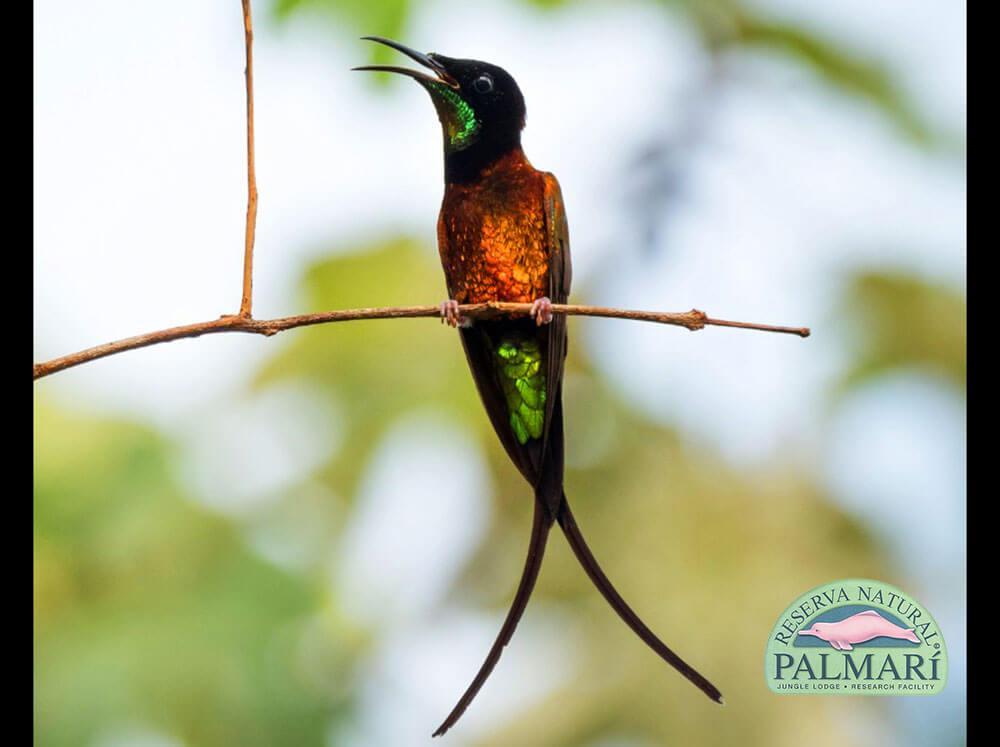 Reserva-Natural-Palmari-Fauna-161