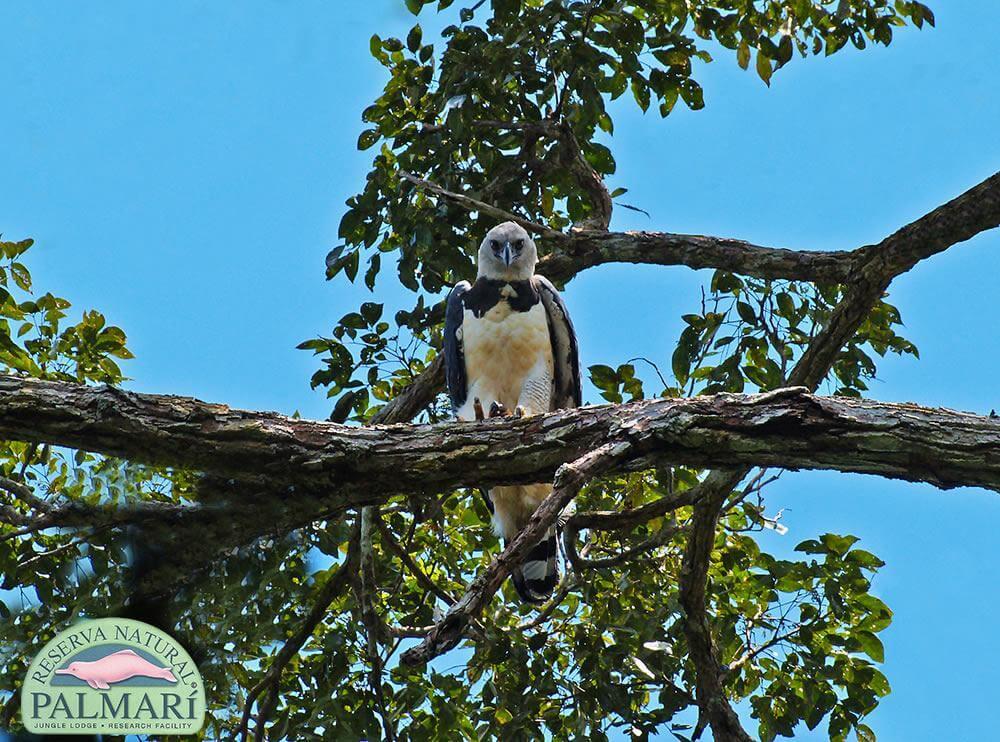 Reserva-Natural-Palmari-Fauna-162
