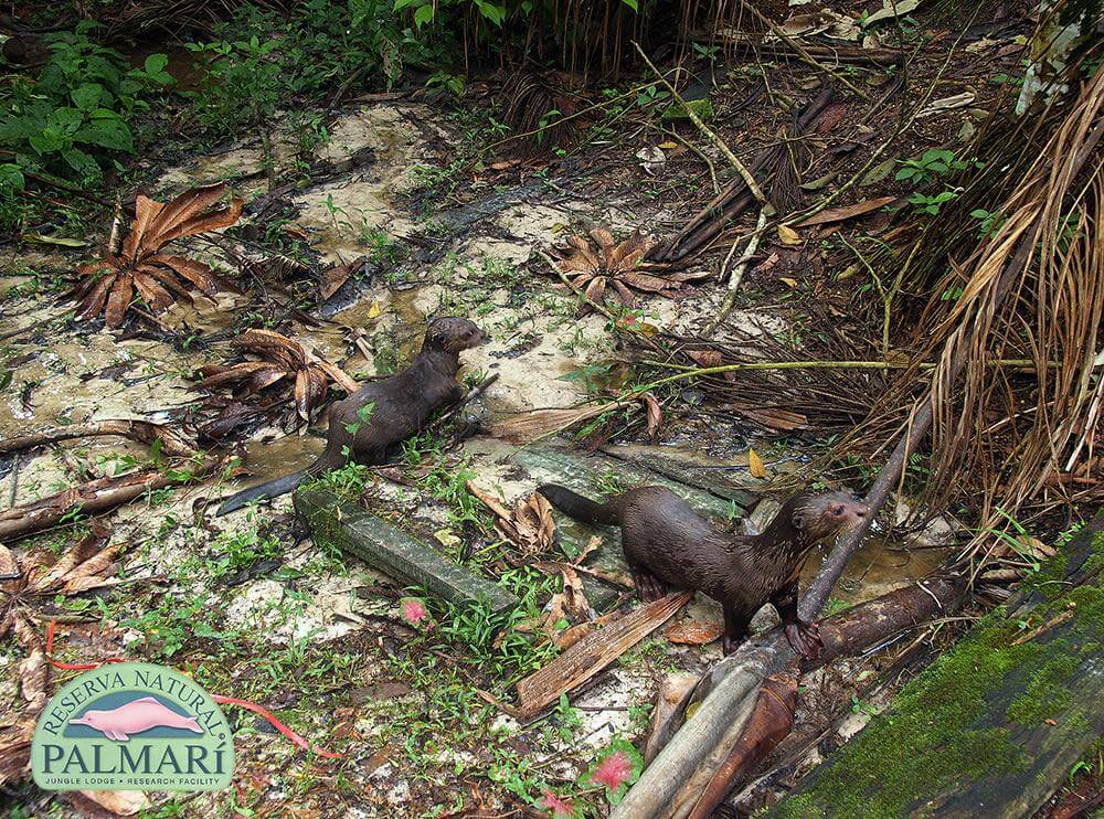 Reserva-Natural-Palmari-Fauna-166