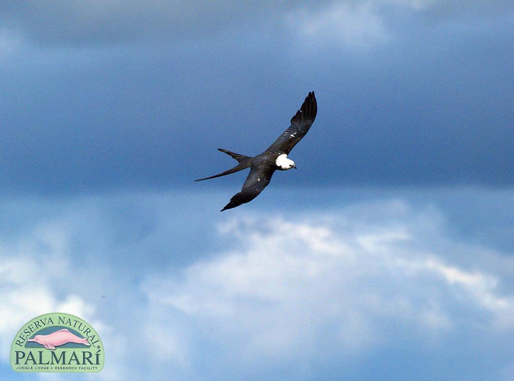 Reserva-Natural-Palmari-Fauna-167