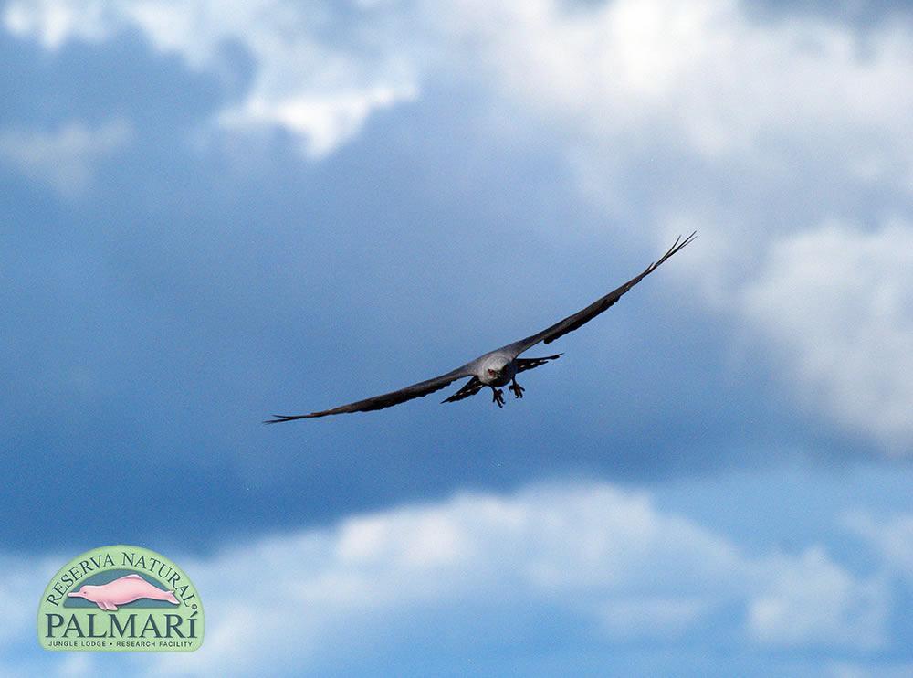 Reserva-Natural-Palmari-Fauna-170