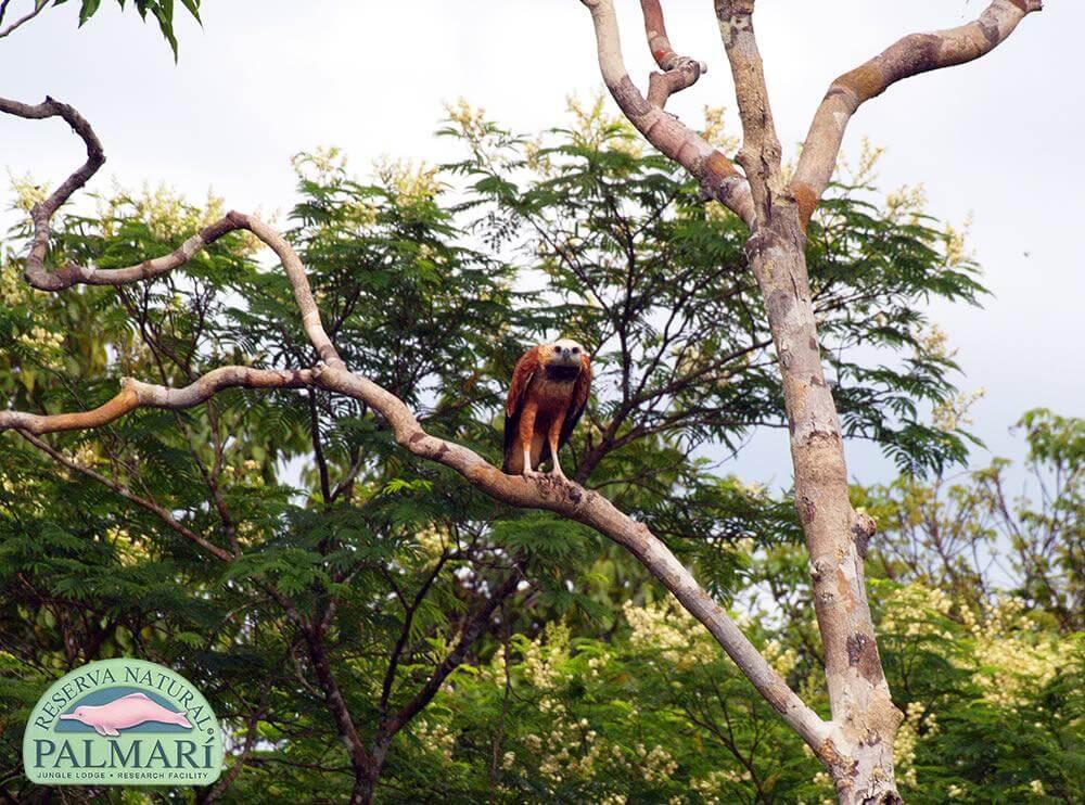 Reserva-Natural-Palmari-Fauna-171