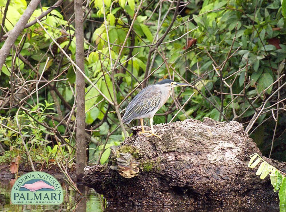 Reserva-Natural-Palmari-Fauna-172