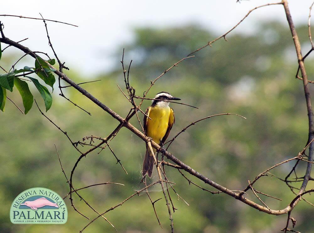 Reserva-Natural-Palmari-Fauna-173