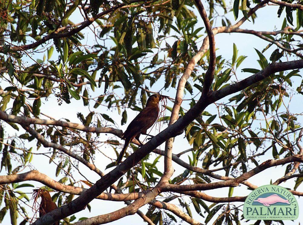 Reserva-Natural-Palmari-Fauna-174