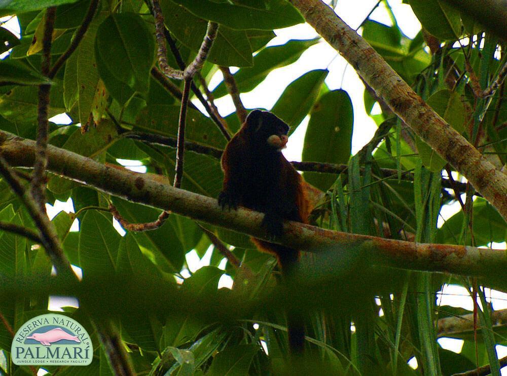 Reserva-Natural-Palmari-Fauna-175