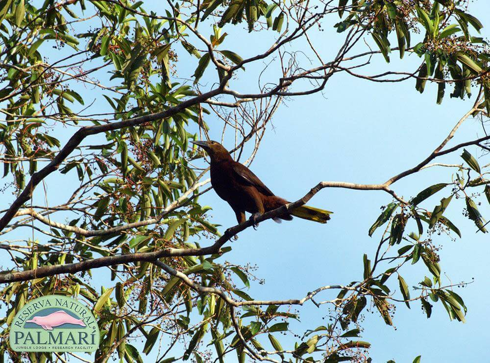Reserva-Natural-Palmari-Fauna-176