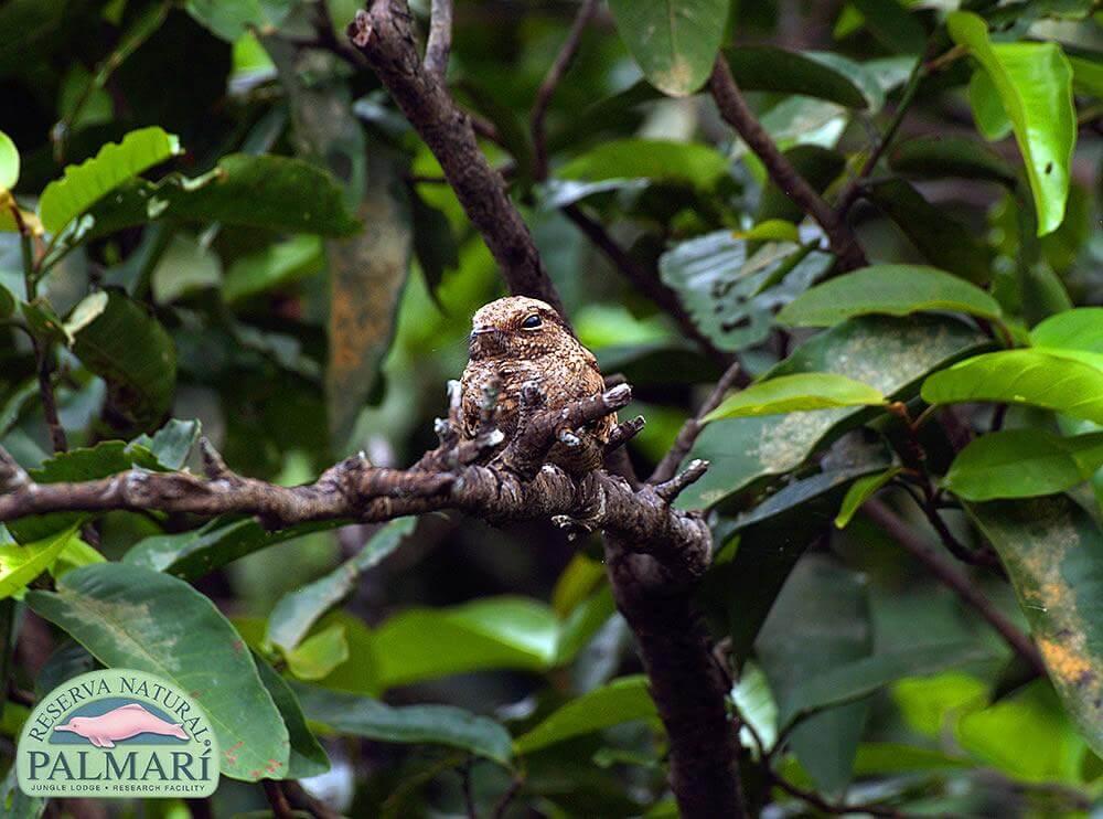 Reserva-Natural-Palmari-Fauna-177