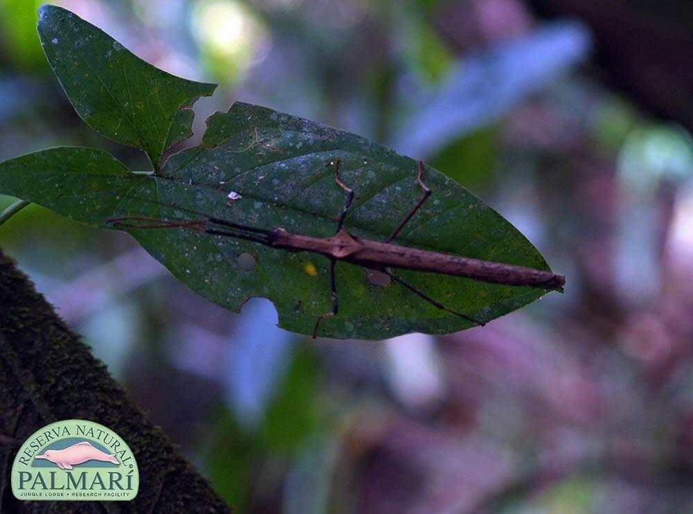 Reserva-Natural-Palmari-Fauna-178