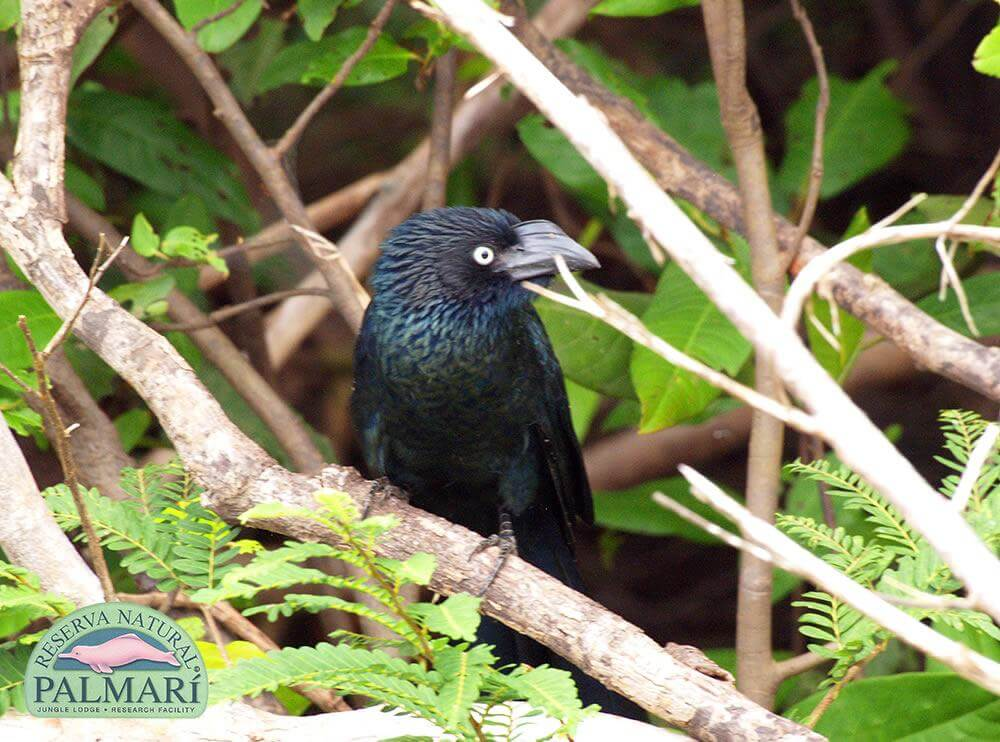 Reserva-Natural-Palmari-Fauna-179