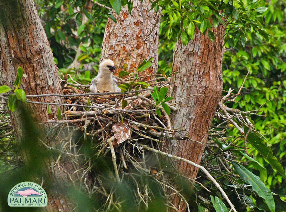 Reserva-Natural-Palmari-Fauna-180