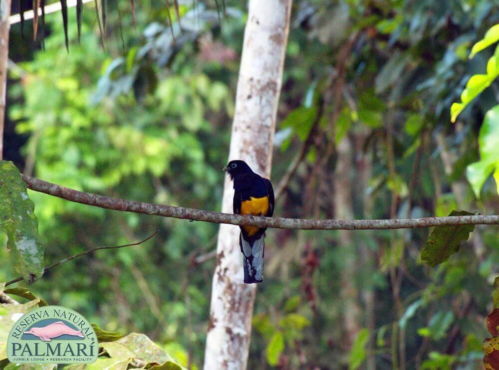 Reserva-Natural-Palmari-Fauna-181