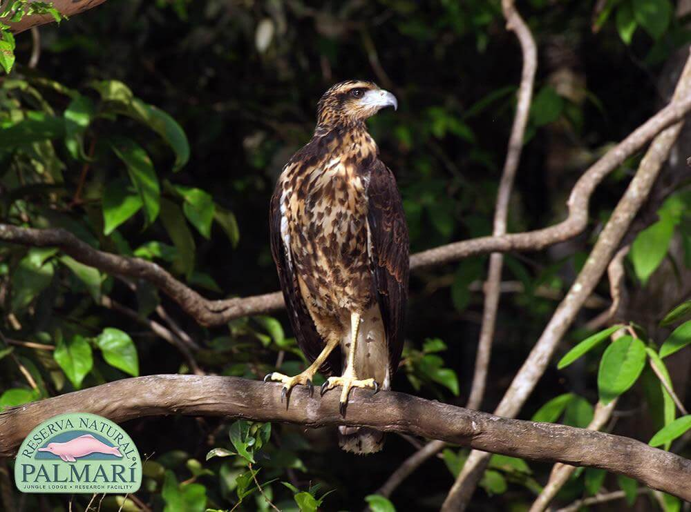 Reserva-Natural-Palmari-Fauna-182
