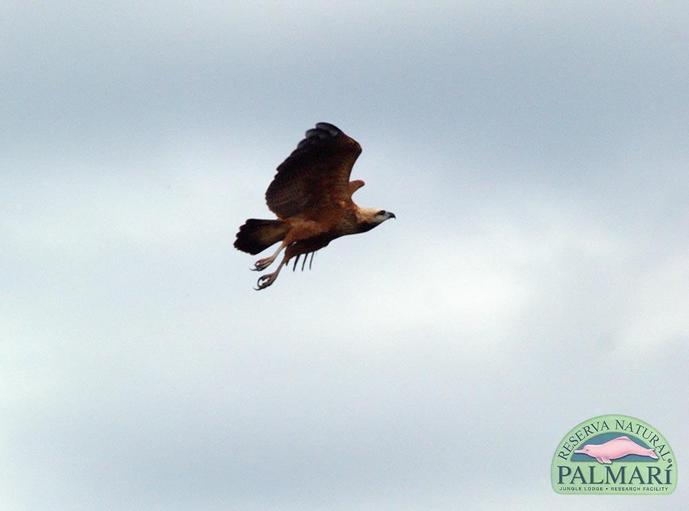 Reserva-Natural-Palmari-Fauna-185