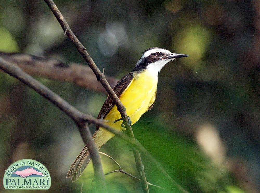 Reserva-Natural-Palmari-Fauna-190