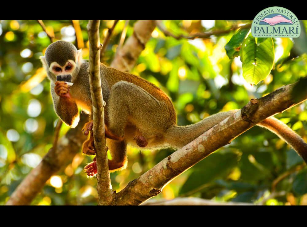Reserva-Natural-Palmari-Fauna-192