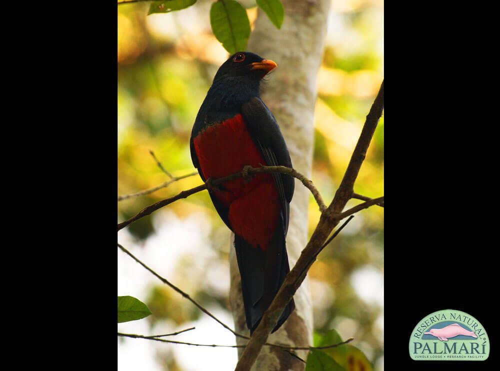 Reserva-Natural-Palmari-Fauna-194