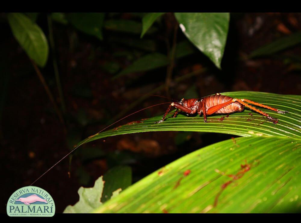 Reserva-Natural-Palmari-Fauna-197