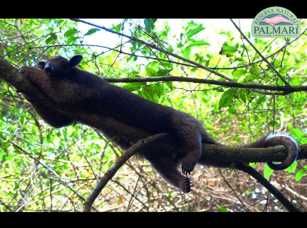 Reserva-Natural-Palmari-Fauna-199