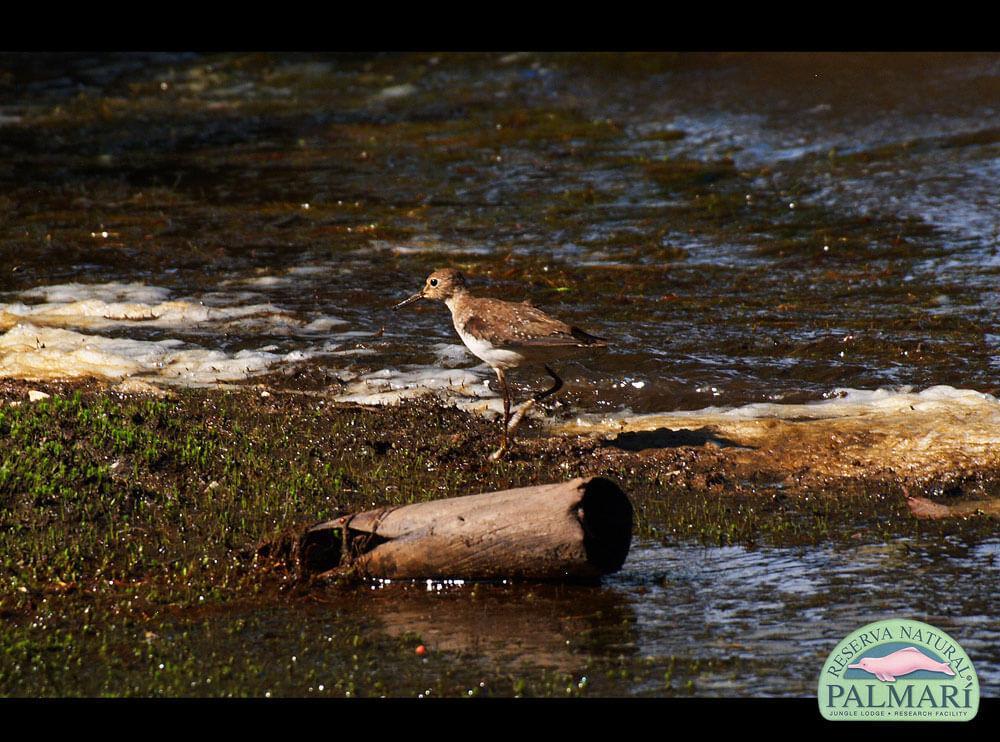 Reserva-Natural-Palmari-Fauna-205