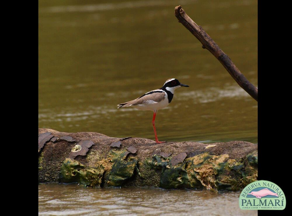 Reserva-Natural-Palmari-Fauna-206