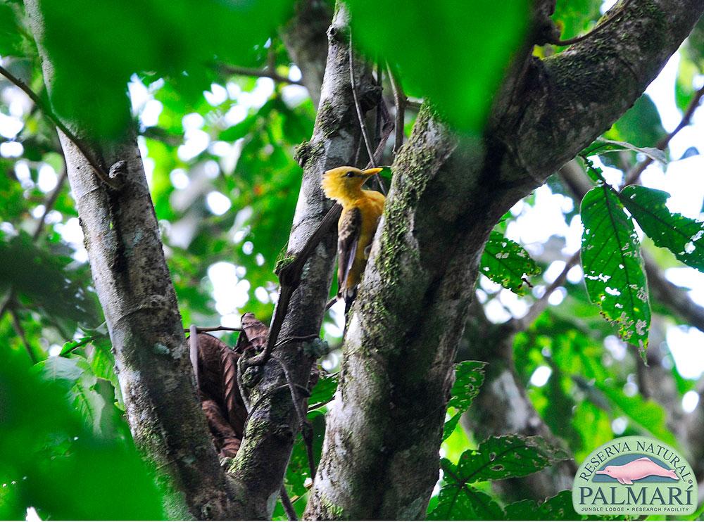 Reserva-Natural-Palmari-Fauna-209