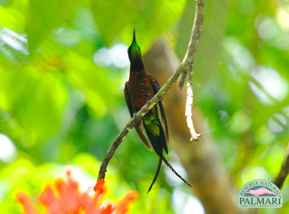 Reserva-Natural-Palmari-Fauna-217