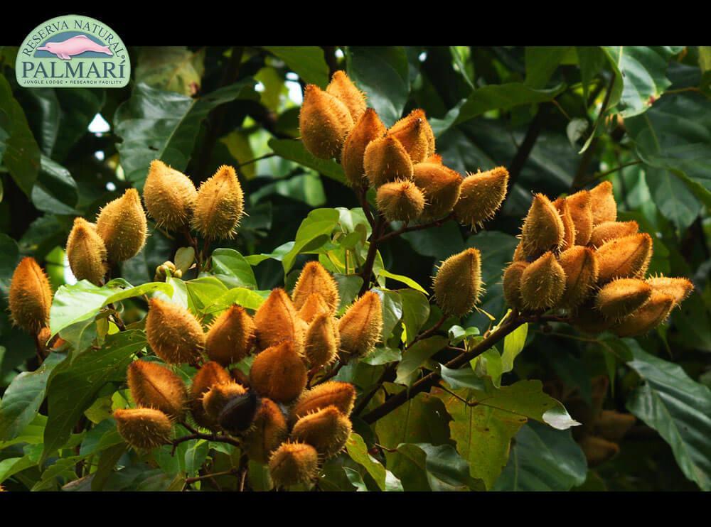Reserva-Natural-Palmari-Flora-01