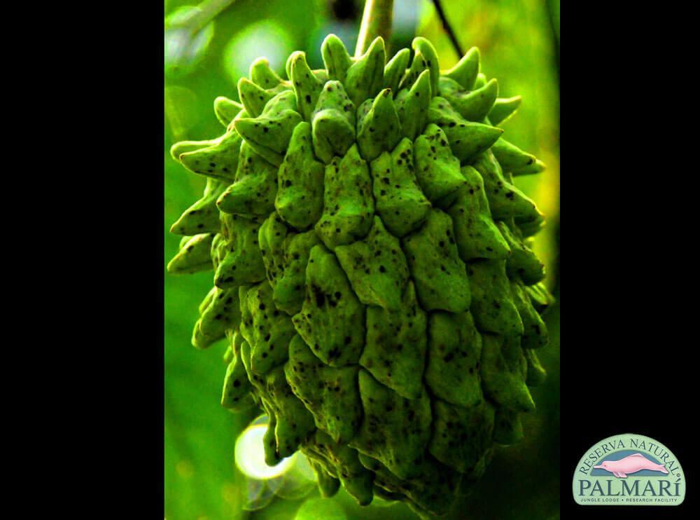 Reserva-Natural-Palmari-Flora-02