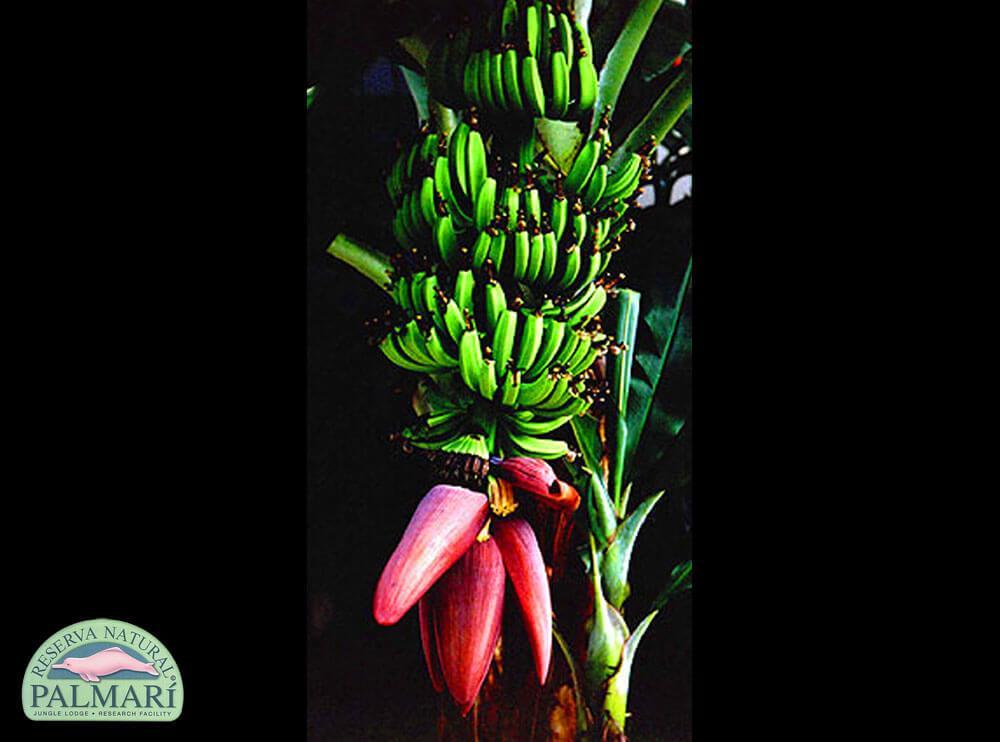 Reserva-Natural-Palmari-Flora-03