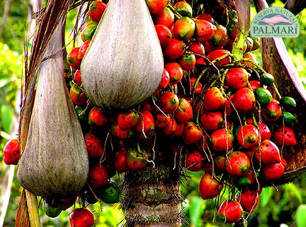 Reserva-Natural-Palmari-Flora-05