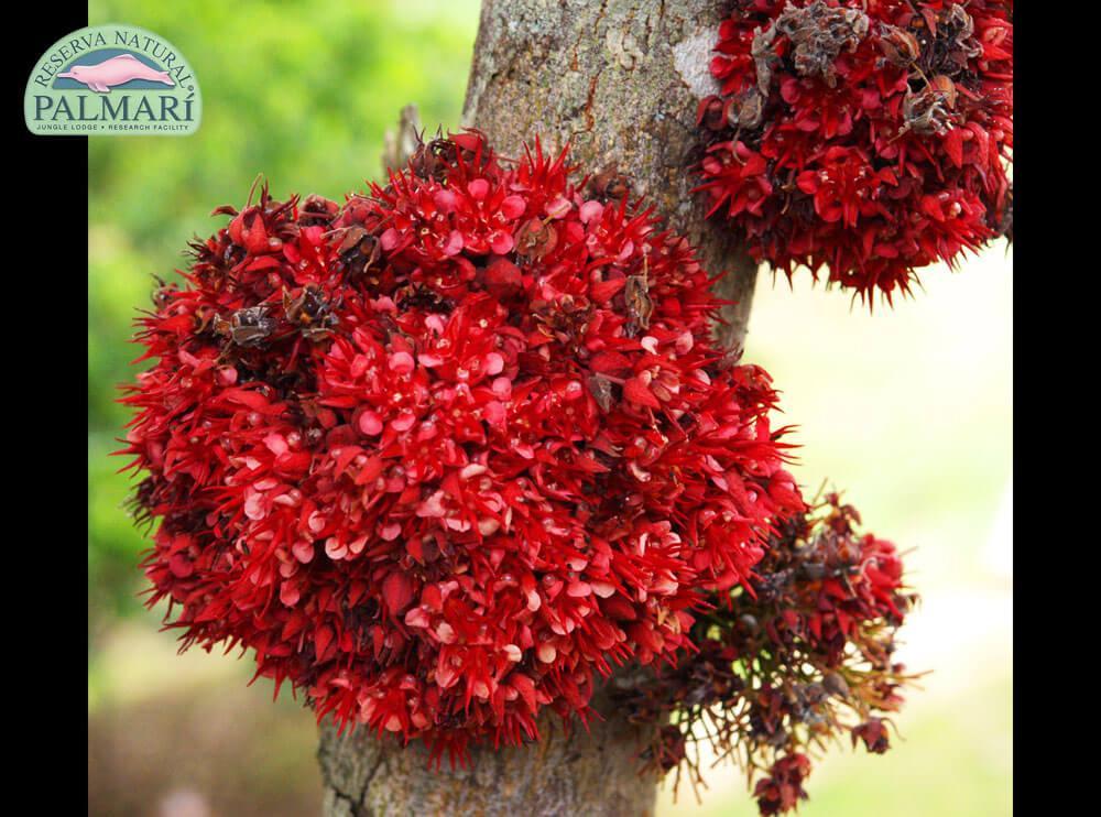 Reserva-Natural-Palmari-Flora-06