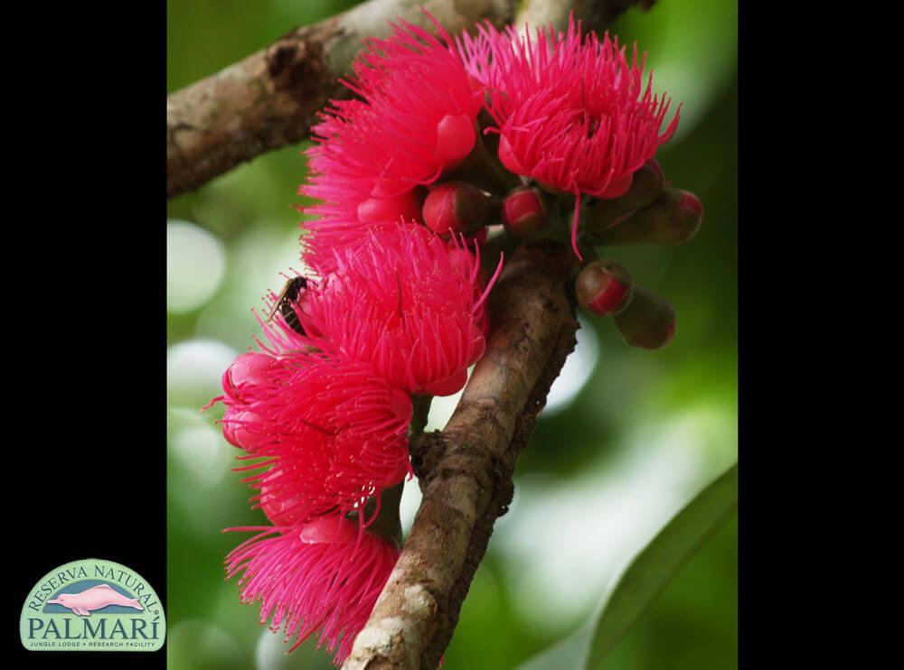 Reserva-Natural-Palmari-Flora-09